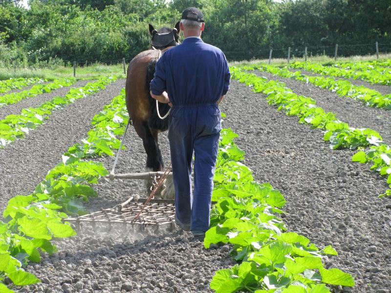 Eindelienge biologische groenten