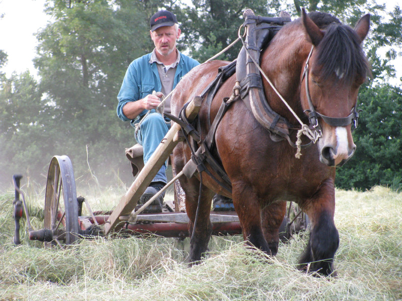 't Hof Eindelienge, de paarden