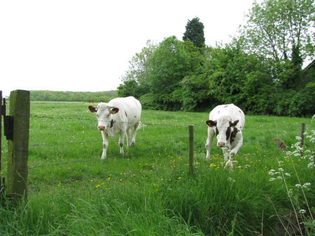 't Hof Eindelienge ons vee